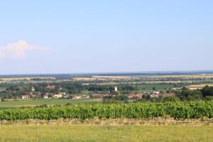 Blick vom Weinberg auf Kulm
